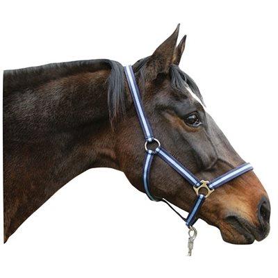 Licou bicolore pour cheval - Bleu