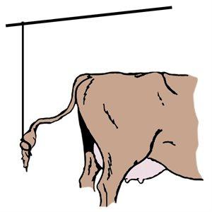 Corde élastique (queue de vache) 3 / 16'' x 500'