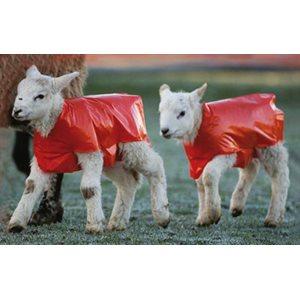 Couverture pour agneaux (4016000) *